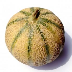 coltivazione meloni