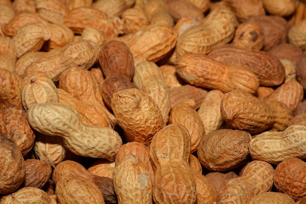 Come coltivare le arachidi coltivazione for Semina arachidi