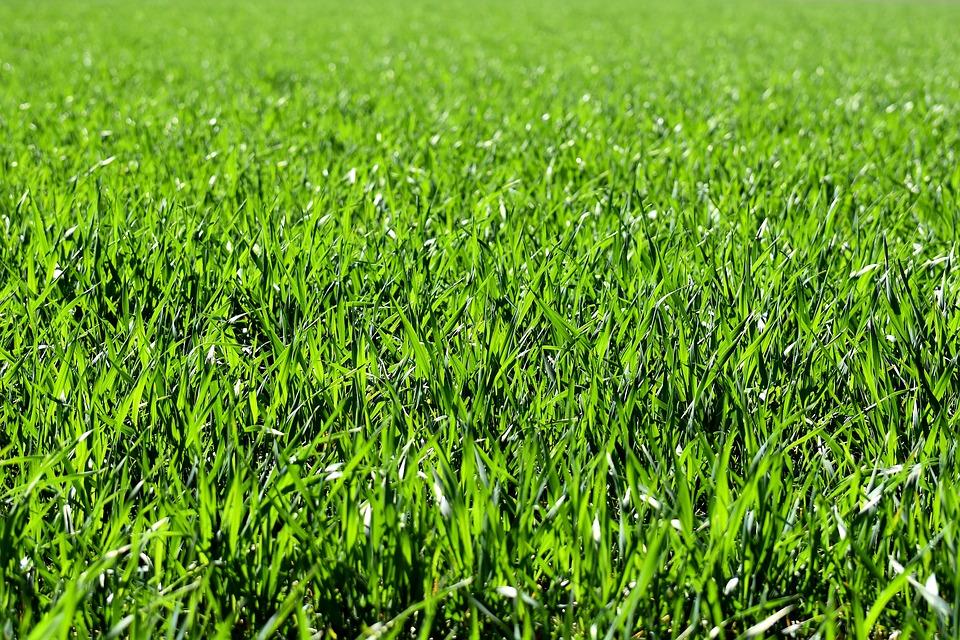 Come e quando seminare il prato guida coltivazione - Quando seminare erba giardino ...