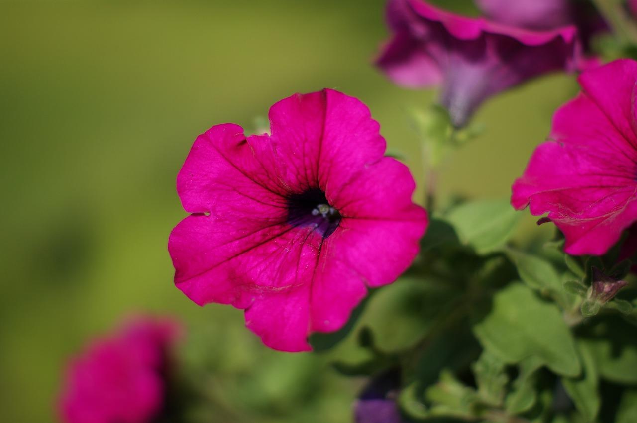 Fiori resistenti al sole diretto perfect piante da for Surfinia inverno